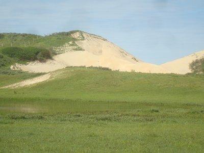 BLOESEMREMEDIE DESERT ROSE OF SOCROTA (Adenium obesium)  Inhoud 10 cc